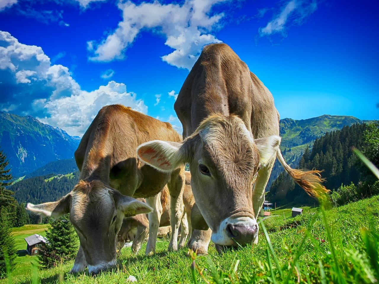 Tierfutter - Assmann Perle